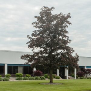 Thumnail Image for Walbro completes 30,000 square foot expansion in cass city, michigan